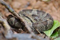 坑蛇蝎 免版税库存图片