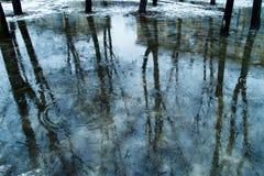 水坑:大海,反射树和圈子黑树干与光秃的分支残余雪波纹的在水的, 库存图片