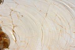 块大理石最近的猎物西班牙纹理 库存图片