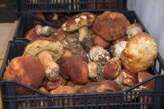 块菌和蘑菇意大利纤巧意大利欧洲 库存图片