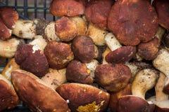 块菌和蘑菇意大利纤巧意大利欧洲 免版税图库摄影