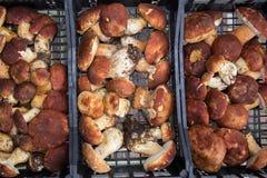 块菌和蘑菇意大利纤巧意大利欧洲 库存照片