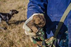 块菌狩猎在阿布鲁佐,意大利 免版税库存照片