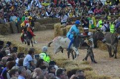 块菌的开始公平在晨曲(库尼奥),举行了超过50年,驴种族 库存图片