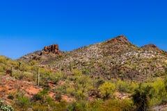 坚固性山坡在亚利桑那` s Sonoran沙漠,明亮的红色地球,柱仙人掌仙人掌,其他多汁植物,深蓝天 免版税库存图片