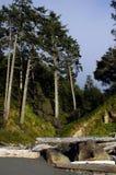 坚固性岩石俄勒冈海岸 免版税库存照片