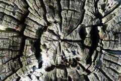 坚固性木头 库存照片