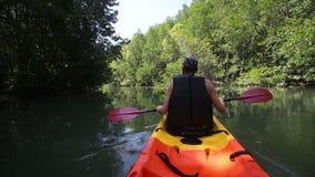 坚强的更老的人荡桨在美洲红树树中的皮船 影视素材