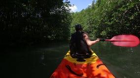 坚强的更老的人荡桨在美洲红树树中的皮船 股票录像