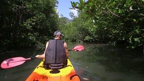 坚强的更老的人荡桨在美洲红树树中的皮船 股票视频
