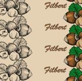 坚果欧洲榛树 库存照片