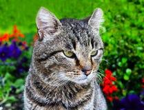 坚硬看的猫 库存图片