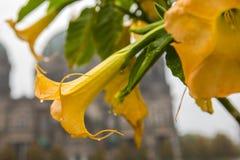 坛场在柏林大教堂前面开花在德国 库存照片