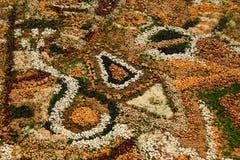 坛场种子 图库摄影