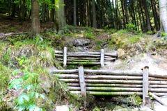 水坝在森林里 库存图片