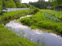 水坝繁殖的鳗鱼 库存图片