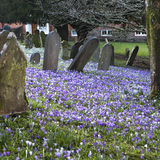 坟墓和十字架和石头在老哥特式公墓在英国 免版税库存照片