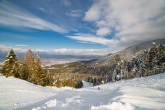 坡道滑雪在晴天 免版税库存照片