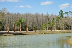 坦帕棕榈社区 免版税库存图片