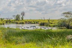 坦桑尼亚-塞伦盖蒂国家公园 图库摄影