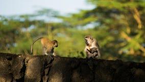 坦桑尼亚 库存照片