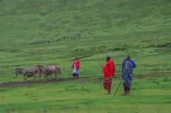 坦桑尼亚 免版税库存照片