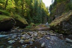 坦纳小河和Wahclella瀑布在哥伦比亚河峡谷 免版税图库摄影