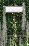 垂悬与植物装饰的空的标志 免版税库存图片