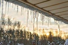 垂悬从一个木游廊的屋顶以日落为背景具球果落叶林的闪耀的冰柱 免版税库存照片
