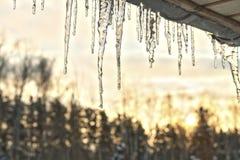 垂悬从一个木游廊的屋顶以日落为背景具球果落叶林的闪耀的冰柱 库存图片