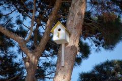 垂悬从与入口孔的树的鸟房子以圈子的形式 阿塞拜疆巴库 在树的黄色鸟舍 库存图片