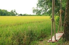 垂悬从在稻田旁边的大树的空的木摇摆 库存照片