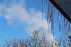 垂悬从大厦的屋顶的冰柱反对蓝天 免版税图库摄影