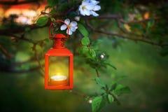 垂悬从树枝的燃烧的灯笼 库存图片