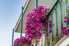 垂悬从阳台的喇叭花 免版税库存照片