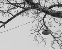 垂悬单色葡萄酒的灯在老树,泰国 免版税库存图片