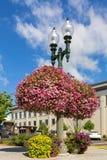 垂悬和盆的植物在Lynden华盛顿美国 免版税库存照片