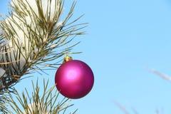 垂悬在一个具球果分支的球形 免版税库存图片