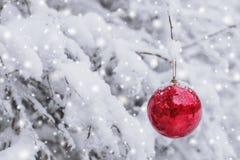 垂悬在一个多雪的分支的红色圣诞节球在冬天森林圣诞快乐和新年快乐里 免版税库存照片