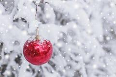 垂悬在一个多雪的分支的红色圣诞节球在冬天森林里 库存图片