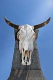 垂悬在一个混凝土桩的公牛头骨 免版税库存照片