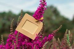垂悬在一朵紫色花的空的框架户外 免版税库存照片