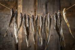 垂悬在一条线的干鱼,在老委员会 免版税图库摄影