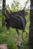 垂悬在一条绳索的老马马鞍在树之间的一个森林里 牛仔党 免版税图库摄影