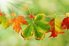垂悬在一条绳索的秋叶在公园 免版税库存图片