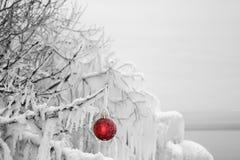 垂悬在一棵冰川覆盖的树的红色圣诞节装饰品 免版税图库摄影