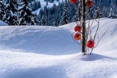 垂悬在一棵树的树枝的红色圣诞节装饰在一个深刻的雪组装的 库存图片