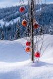 垂悬在一棵树的树枝的红色圣诞节装饰在一个深刻的雪组装的 库存照片