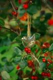 垂悬在一棵树的玻璃鸟用红色莓果 免版税库存图片
