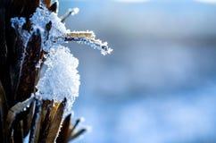 垂悬在冬天植物的冻冰 库存图片